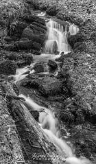 Plymbridge fall_signed (Jason Bradshaw Photography) Tags: plymbridge plymouth photography photos capture exposure water walks woodland waterfall southwest slowshutterspeed landscapephotography landscape landscapelovers longexposure blackandwhite devon digitalphotography canon canonphotography canon400d river rocks moss monochrome