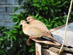 سکوتم نشانی بر . . . (monje.ir) Tags: پرنده رفیق سکوت