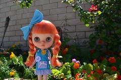 Sunshine in the Garden