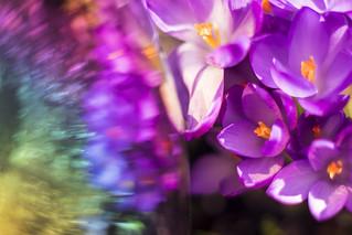 Frühlingsblumen 240317-5