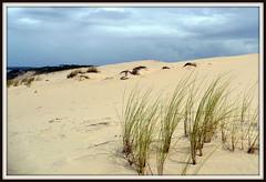 Dune du Pyla  13-08-2008 (10) (Esteban 86360) Tags: été2008 dune pyla france sable arcachon bassin gironde europe landscape summer mer ocean océan plage vacances holydays ciel sky cloud nuage