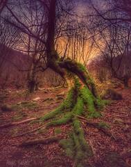 2017-04-06_10-33-52 (angelcalvetezumalde) Tags: forest bosque enchantedforest moos beech irix15mm pentaxk1 musgo