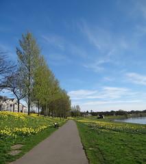 River Dee Path (Ian Robin Jackson) Tags: trees path river sky aberdeen sony zeiss bluesky houses seat clouds