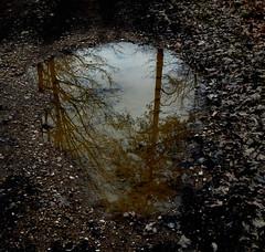 Off for vacation / Auszeit wegen Urlaubs (Caledoniafan (Astrid)) Tags: puddle pfütze caledoniafan frühling spring landscape landschaft reflections reflection spiegelung