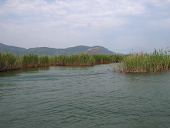 Dalyan river channel through reeds (Radu Bucuta) Tags: holiday turkey river easter dalyan 2013 turcia
