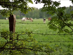 Along the Meadow (fixedfocallength) Tags: leica lumix bokeh meadow panasonic summicron barbedwire m43 gf1 mft leicasummicronm50mm microfourthirds
