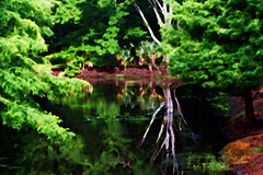 Pond Reflections (hollykl) Tags: photomanipulation reflections pond digitalart winterparkfl wardpark arteffects