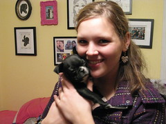 Danielle & Dolly (krisjaus) Tags: dogs puppy bostonterrier puppies buddy smalldogs newpuppy bostonterriers babydogs krisjaus danielleeberhart