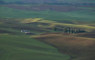 ... a family farm in the Palouse [Try L]