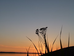 A silent moment (Moqit) Tags: sunset sea evening silence archipelago aland land