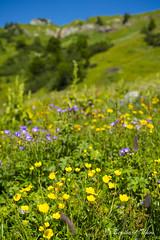 Summer blossom at Karwendel N4 (Bernhard_Thum) Tags: summer mountains alps nature sommer natur berge summertime alpen legacy eng tistheseason karwendel carlzeiss zf greenscene distagont235 nikond800e bernhardthum