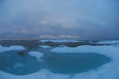 Walrus Hunt 8_5_13 2 029 (efusco) Tags: ocean sea ice alaska native arctic butcher hunter beaufort walrus hunt midnightsun iceburg floe inupiat inupiaq aivik femalewalrushunt85132