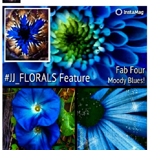 Fab four-Moody Blues from @jj_florals . My feature is in bottom right.  @dreabearhugz what a lovely collage ty for including me! Kudos to @jaunseemas @teabeat @herrsnaps beautiful