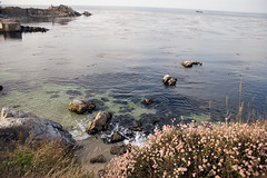 Open Sea (Eternal Eye) Tags: ocean life california ca flowers blue houses sunset sea wild people urban plants streets beach nature fog boat monterey cool fishing walks pacific wildlife montereybay flute seals roads pacificgrove companies urbanlife