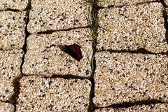 SAM_3034a_jnowak64 (jnowak64) Tags: poland polska krakow natura makro cracow mik malopolska przyroda architektura lato motyl owady krakoff