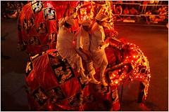 Sri Lanka Travel Photography Perahera Festival 2013 Kandy.016 by Hans Hendriksen (Hans Hendriksen Travel Photography) Tags: sri lanka lanca srilanka sirilanca asia azi asien  travel photography reisfotografie reisefotografie reisebilder reisfoto reis voyage viaje viaggio viagns nature landscape landschap landschaft culture cultuur colombo uda walawa yara national park pinnawela dambulla sigiriya negombo kandy dodandur elephant olifant habarana anuradhapura mihintale gal vihara trincomalee galle matara nuwara eliya ella horton plains polonnaruwa tamil perahera festival esala boeddha buddha buddhist procession randoli kumbal religie religion 2013 fire dancers torch whip acrobats sacred tooth temple