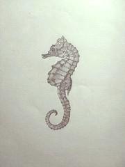 seahorse (pcaoakley) Tags: illustration pencil sketch seahorse drawing