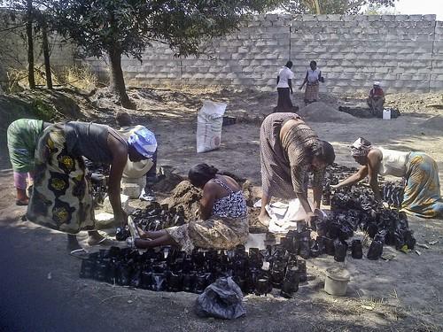 Zambia - Community Group Filling Poly Pots for Savannah Project (v), Mufulira Town -  July, 2013
