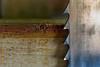 2010 Ballenberg (Edi Bähler) Tags: ballenberg freilichtmuseum hotpick kantonbern schweiz switzerland sägeblatt tiefenschärfe depthoffield brienzwiler bern nikond3s 28300mmf3556