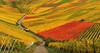 Vintage in the autumn Vineyard (Habub3) Tags: travel autumn holiday fall nature canon vintage germany landscape deutschland vineyard search reisen colorful europa europe stitch stuttgart urlaub herbst natur harvest vine powershot landschaft vacanze wein weinberg g12 weinlese serach 2013 weinstadt habub3 mygearandme