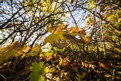 2013-10-31-Herbstfotos-20131031-082909-i083-p0004-SLT-A65V-8_mm-.jpg