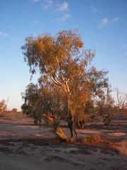 Coongie Lakes I (Fehlfokus) Tags: australia outback coongielakes