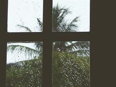 dia de chuva (inumana) Tags: green rain drops loneliness sad chuva cocopalm