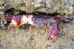Plage de Langkawi (SebastienToulouse) Tags: mer toucan eau mangrove langkawi bateau animaux jetski plage oiseau kedah piscine malaisie crabe poulpe