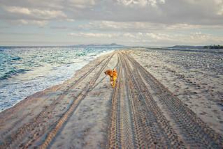 Ole yeller on the Baja beach near Los Barriles