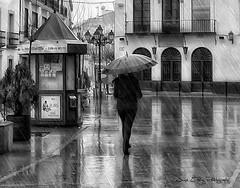 Have you ever seen the rain? (Jos Luis Prez Navarro) Tags: city bw texture textura rain sepia umbrella reflections lluvia nikon cityscape y bn paseo soledad retouch paraguas reflejos d60 nikond60 blacky2007 absoluteblackandwhite 20tfbn josluisprez