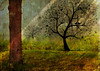 (TaMiMi Q8) Tags: trees tree photoshop turkey rat rays photoshoped treetrunck uzungol treesubject tarabzon