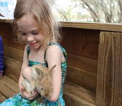 IMG_3350 (drjeeeol) Tags: bunny bunnies farmersmarket katie triplets toddlers pettingzoo 2014 5yearsold 66monthsold
