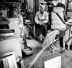 Old Sales Man - explored (AlPie) Tags: street old bw white man black bird birds hongkong emotion sony perspective parrot a33 scene moment sales kowloon selling