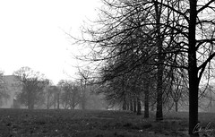 Hide Park Tree-line (Gordon Gray Photography) Tags: park uk trees winter shadow bw white black cold london dream line hide hidepark