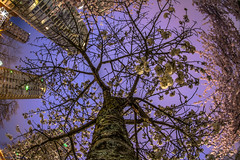 April 5, 2014 (Amanda Catching) Tags: longexposure morning light vancouver cherry spring blossoms east
