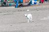 _DSC3507.jpg (orig_lowolf) Tags: usa dog oregon nikon flickr dogpark lakeoswego d300s sigmaaf150500mmf563apodgoshsm