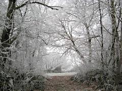 Wir gehen getrost an deiner Hand (amras_de) Tags: wiesbaden dotzheim imhimmelreich himmelreich schnee snow lumi nix snø sneeu nieu snijeg neu sníh sne nego nieve elur neige sneachta hó snjór neve schnéi sniegas sniegs sneeuw nèu snieg zapada nivi snaw sneh sneg snö kar raureif softrime cencelladablanca antzigarzuri givremou galaverna ruigerijp escarchabranca