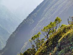 Kilohana Lookout (iFl1ckr) Tags: alakaiswamptrail hawaii napalicoast