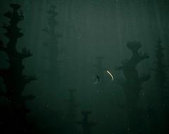 The Seeker (HodgeDogs) Tags: dark depth abzu reshade gaming games water