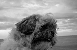Le crépuscule du chien