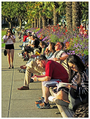 Sunset Lineup (HereInVancouver) Tags: people group sunsetlight lifeonaparkbench reading sitting talking walking texting thinking candid streetphotography canong16 vancouver bc canada denmanstreet vancouverswestend thingstodobythewater palmtrees flowers outside city urban