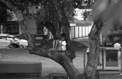 Alone on The tree (Firly Firman) Tags: agfa100 agfaapx100 agfa people pose spotmatic malang pentaxspotmatic streetphotography blackandwhite bnw 35mmfilm filmphotography monochrome sonnar sonnar135mmf35 kid alone