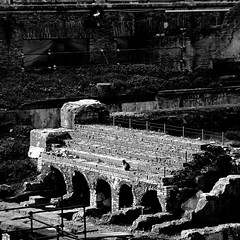 Gatto d'Argentina, Roma (pom.angers) Tags: panasonicdmctz30 ancientrome february 2017 rome roma lazio italia italy europeanunion 100 cat