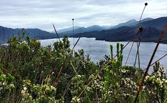 091/365 • view from the top of Balmoral Hill near Casilda Cove • . #portdavey #balmoralhill #buttongrass #southwest #walking #abcmyphoto #tasmania #discovertasmania #tassiestyle #bellalunaboat #Summer2017 #cruising