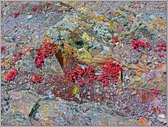 Jardin compartido con rocas (Luis M) Tags: flores abstracto rocas jardn lquenes