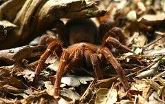 Spider (ABC Open North Queensland) Tags: spiders documentary adventure scorpions worlds worst snakes tropics deserts venom traveltales abcopen