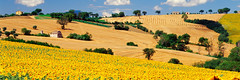 SIM-714753 (SalvadoriArte) Tags: italy panorama field yellow horizontal daylight europe italia day hill sunflower agriculture marche sime marches fantuz ploughedfield italyitalia mediterraneanarea horizontalpanoramic landscapescenics outdoorexterior sunshinesunny maceratadistrict marchesmarche