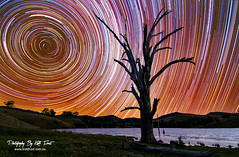 Star Trails @ Lostock (Kiall Frost) Tags: sky tree water grass night photography star cows dam farm trails australia le nsw stacking startrails longexposures lostockdam kiallfrost