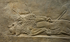 Lion Hunts of Ashurbanipal, dead male lion (profzucker) Tags: sculpture london art ancient iraq lion palace relief beginning britishmuseum gypsum tigris mosul hunt assyrian excavated ashurbanipal neoassyrian ninevah rassam 645bce