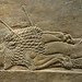 Lion Hunts of Ashurbanipal, dead male lion